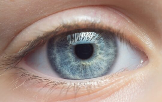 Advanced computer model could lead to improvements in 'bionic eye' technology